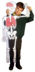 Juego didáctico Henbea Hombre Esqueleto