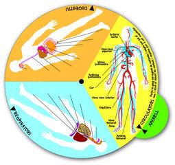 Taula humancat/aparells cos humà