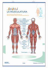 Edigolc lap musculatura/s.nerviós/70x100