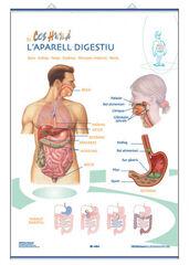 Edigolc lap digestiu/excretor/70x100
