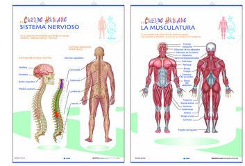 Edigol lap musculatura/s.nervioso/70x100