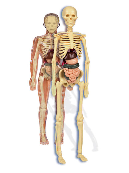Juego científico Clementoni Cuerpo humano