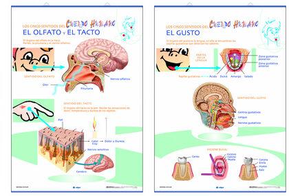 Edigol lap gusto/olfacto/tacto/70x100