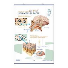 Edigolc lap gust/olfacte/tacte/70x100